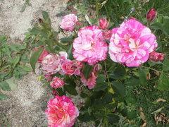 2015_0607_111532-CIMG0795.JPG